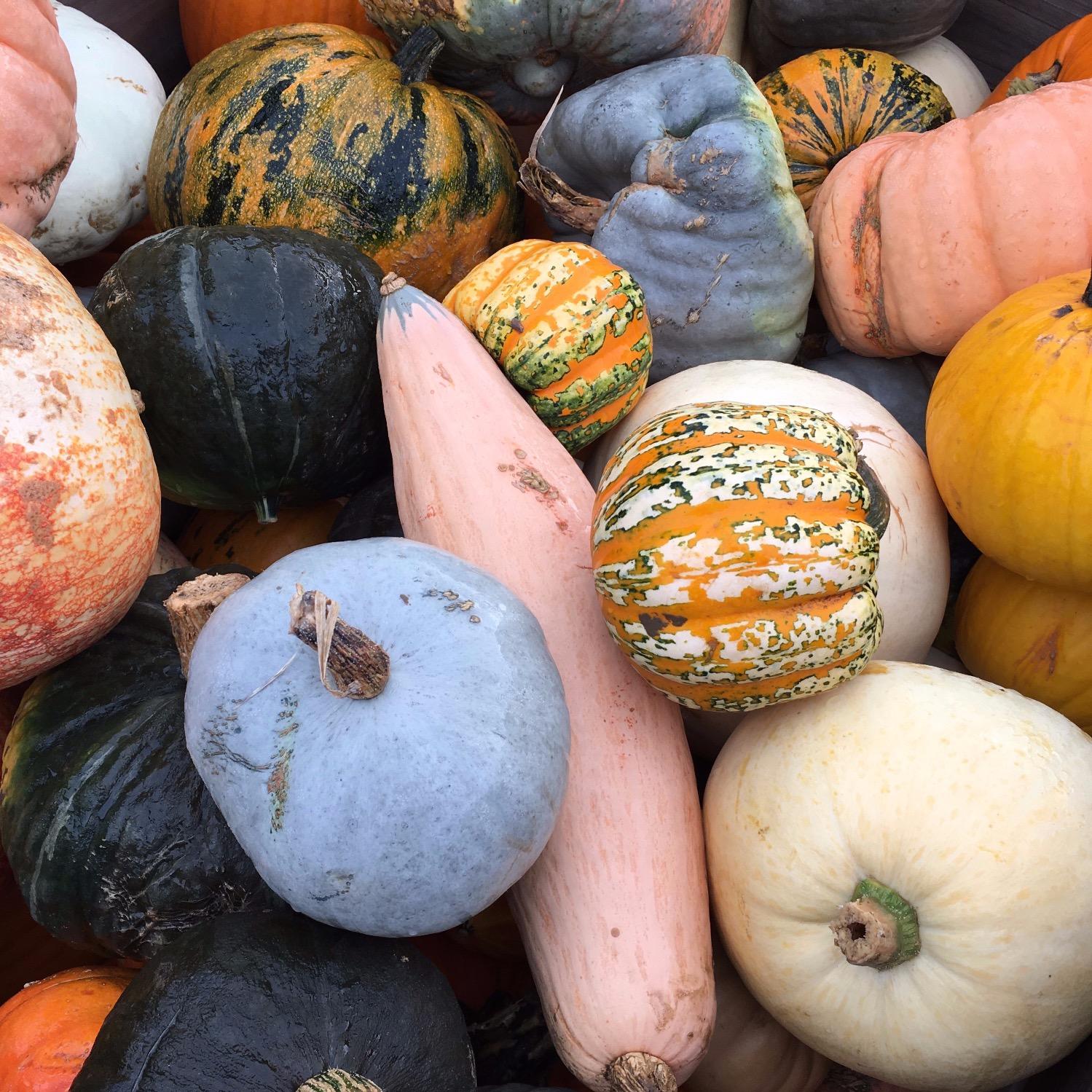 Pumpkin Gifts